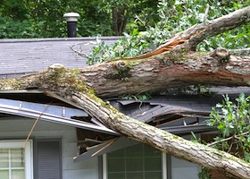 a tree on top of a house that was blown over by wind